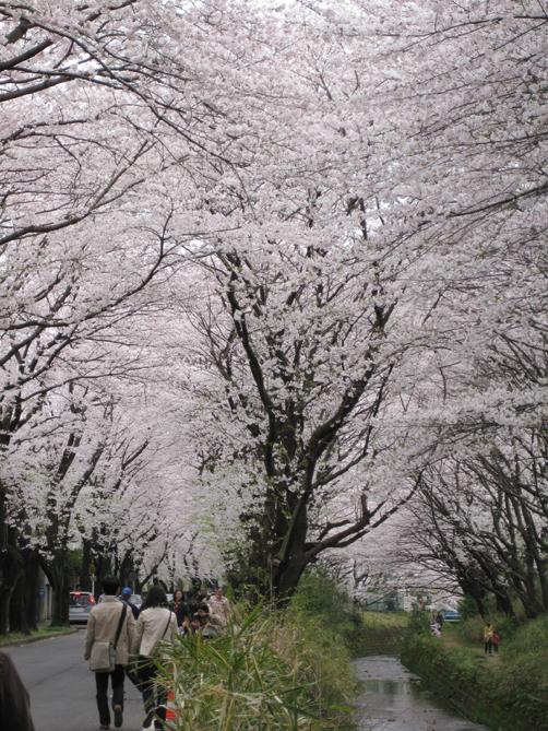 hikijigawa-2.jpg