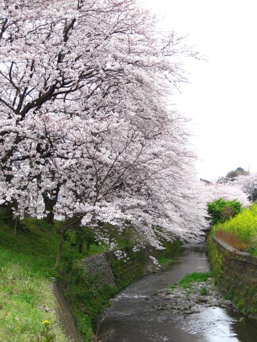 hikijigawa3.jpg